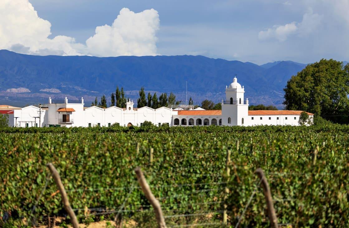 Vineyards in Mendoza, Argentina