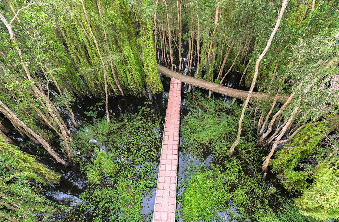 Small,Road,Bending,Through,The,Melaleuca,Forests,In,The,Ecotourism.