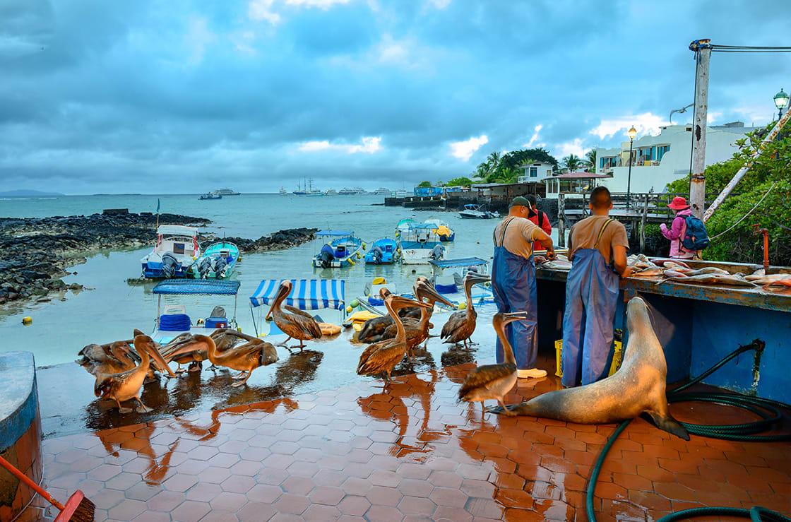 Fish Market, Puerto Ayora, Galapagos
