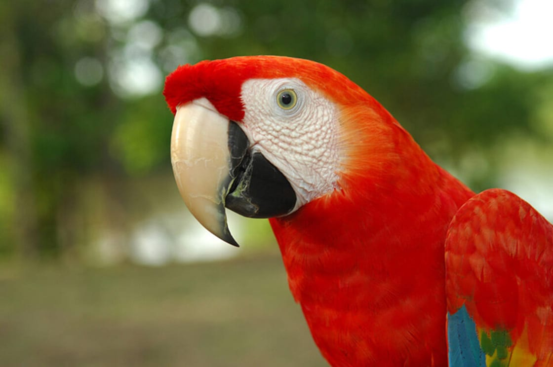 The Macaw Is The Largest Type Of Parrot