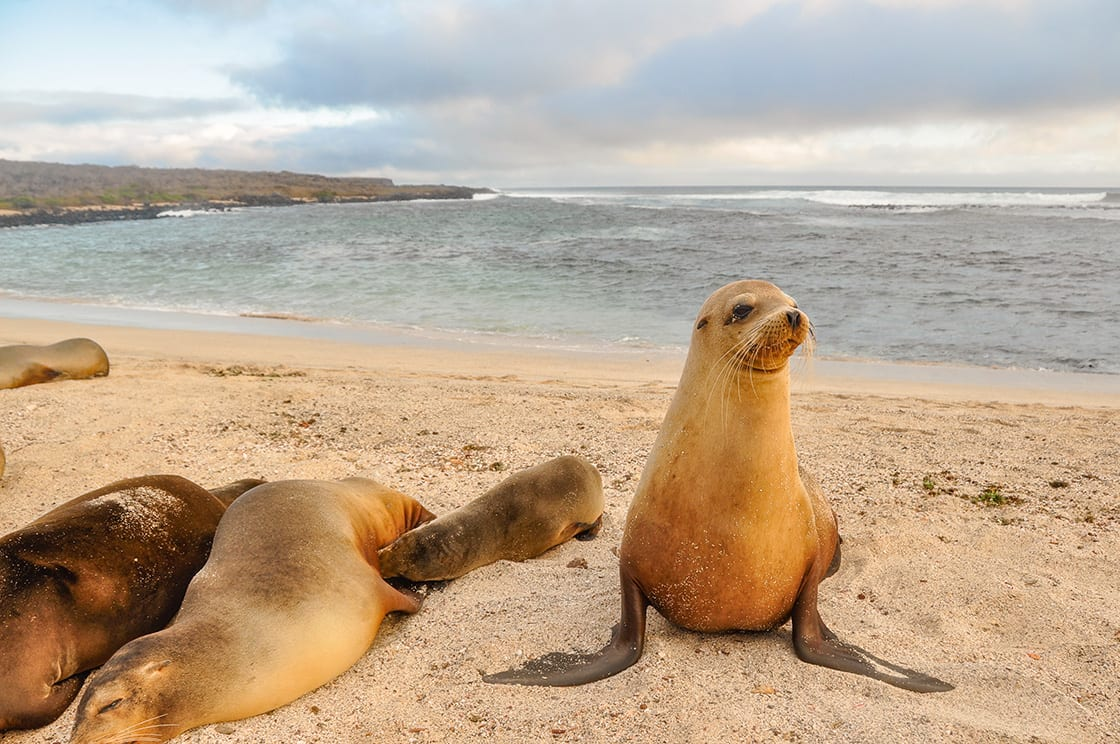 A Sea Lion Family On San Cristobal Island