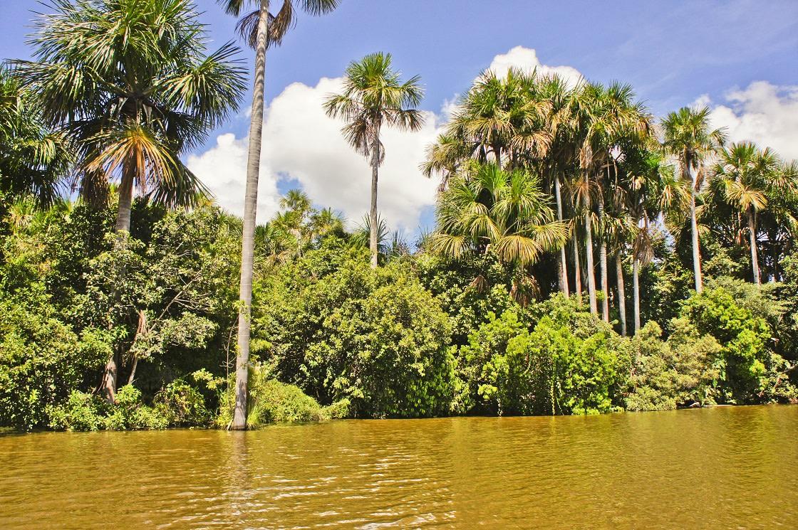 Tambopata Natural Reserve