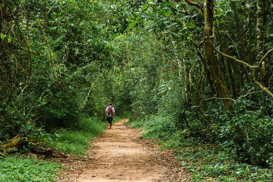 Hiking,In,The,Rainforest,Of,Iguazu,National,Park