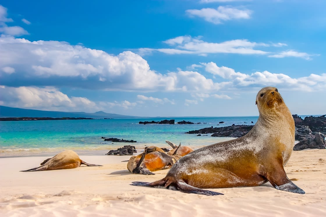 Islands Seals Are Sleeping On The Beach