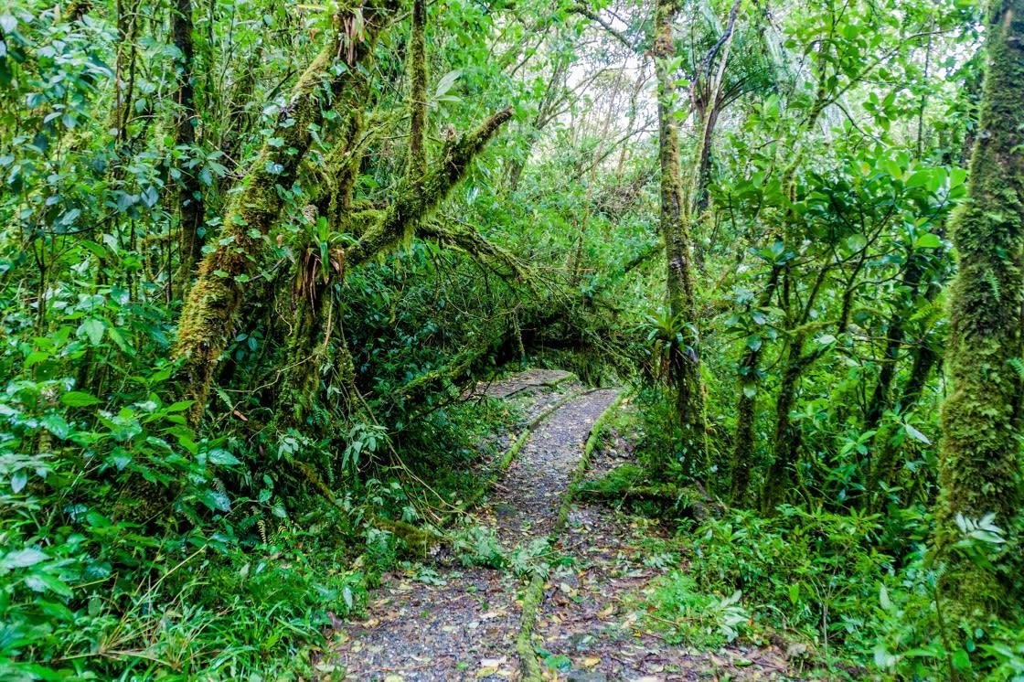 Hiking Trail In National Park Podocarpus Ecuador