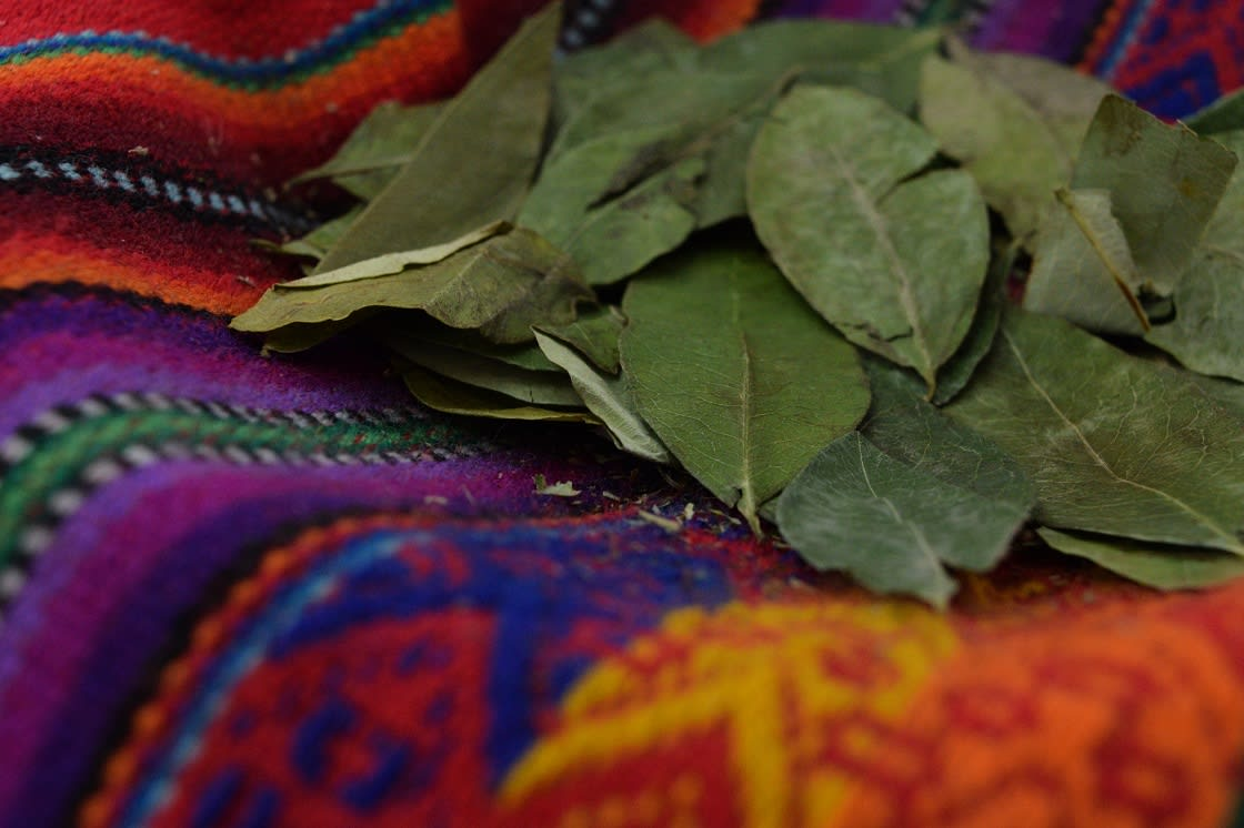 Green Cocoa Leaves