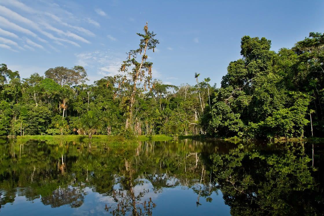 Beautiful Green Landscape Of The Yasuni National Park