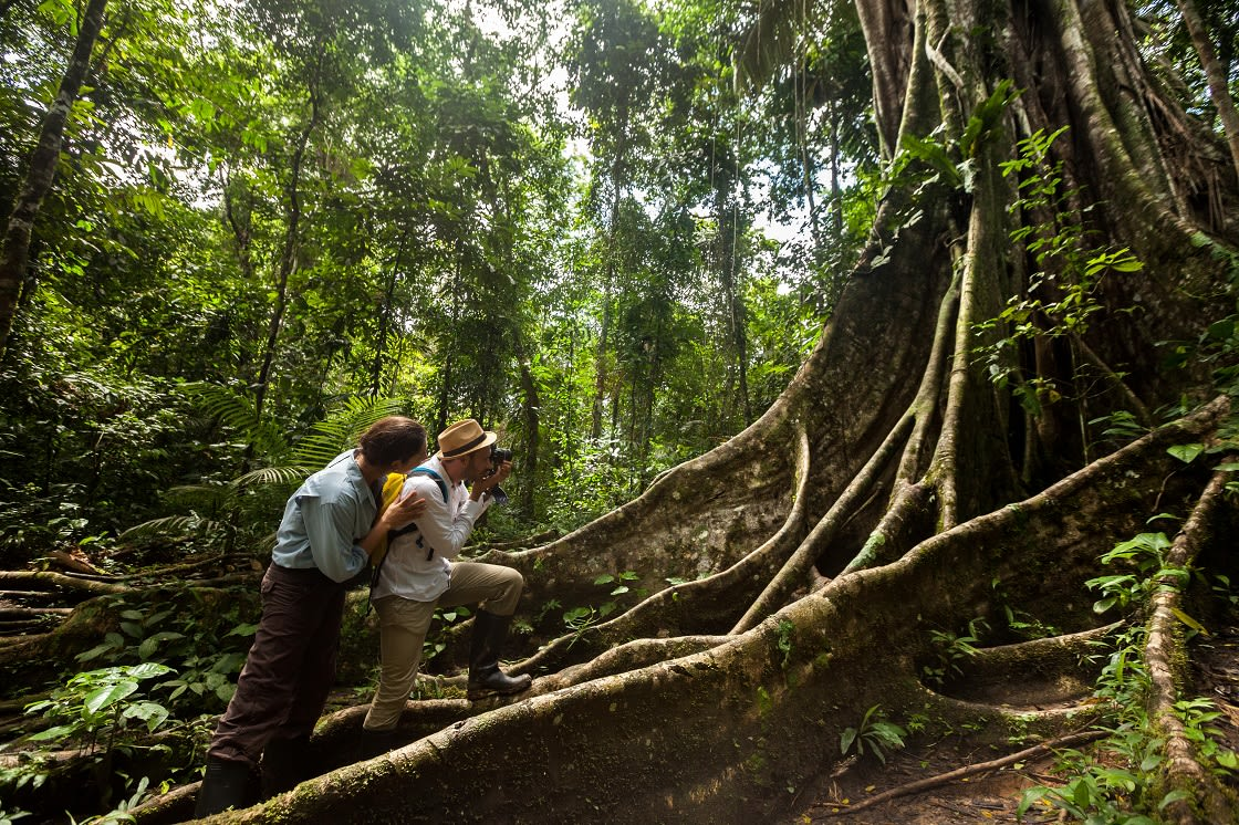 Cpuple taking pictures in a ceiba tree in the peruvian amazon