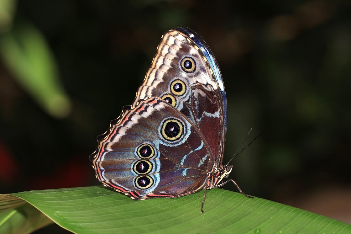 The underside of the butterfly's wings are covered in shades of brown, red, black and grey
