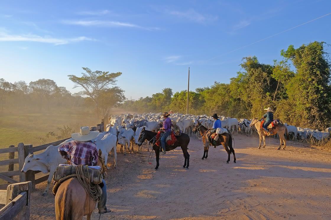 Unrecognizable Cowboys Along The Transpantaneira Highway