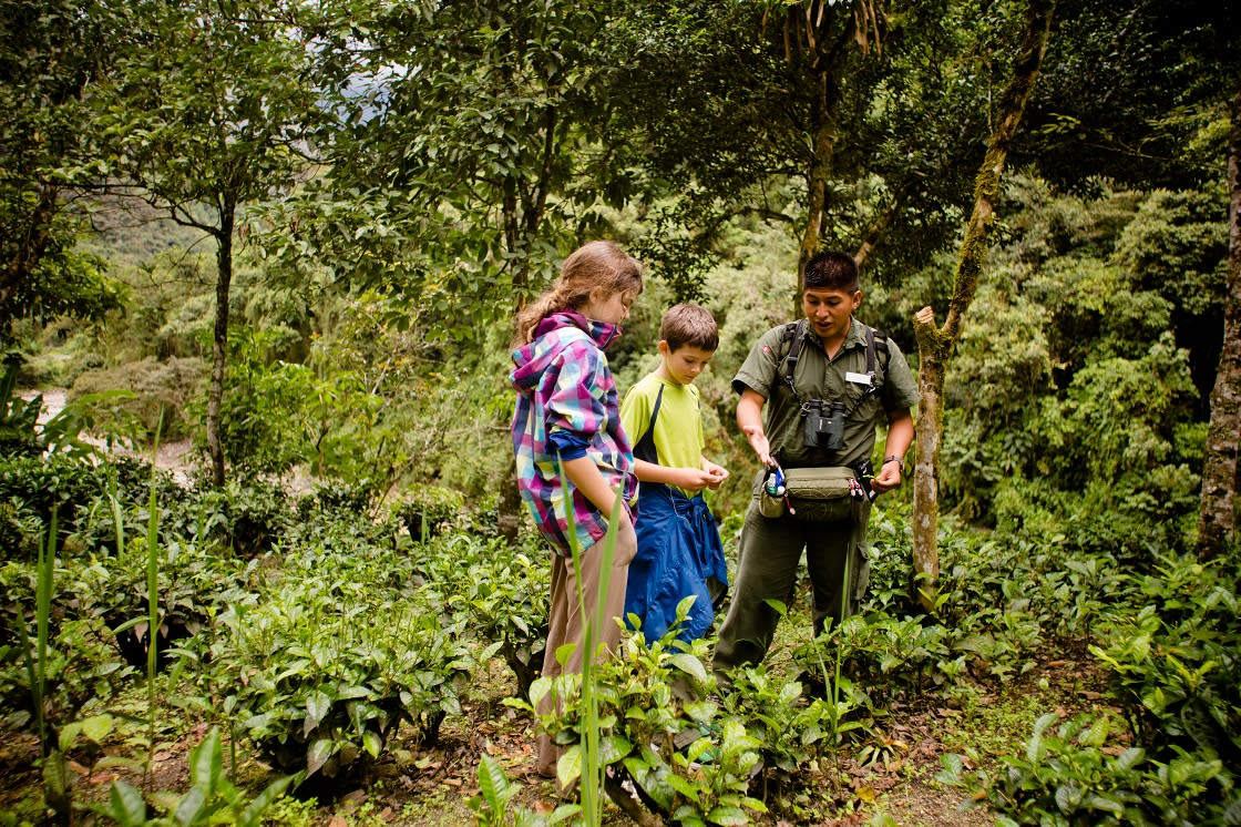 Local Plant Exploration With Inkaterra Naturalist Guide