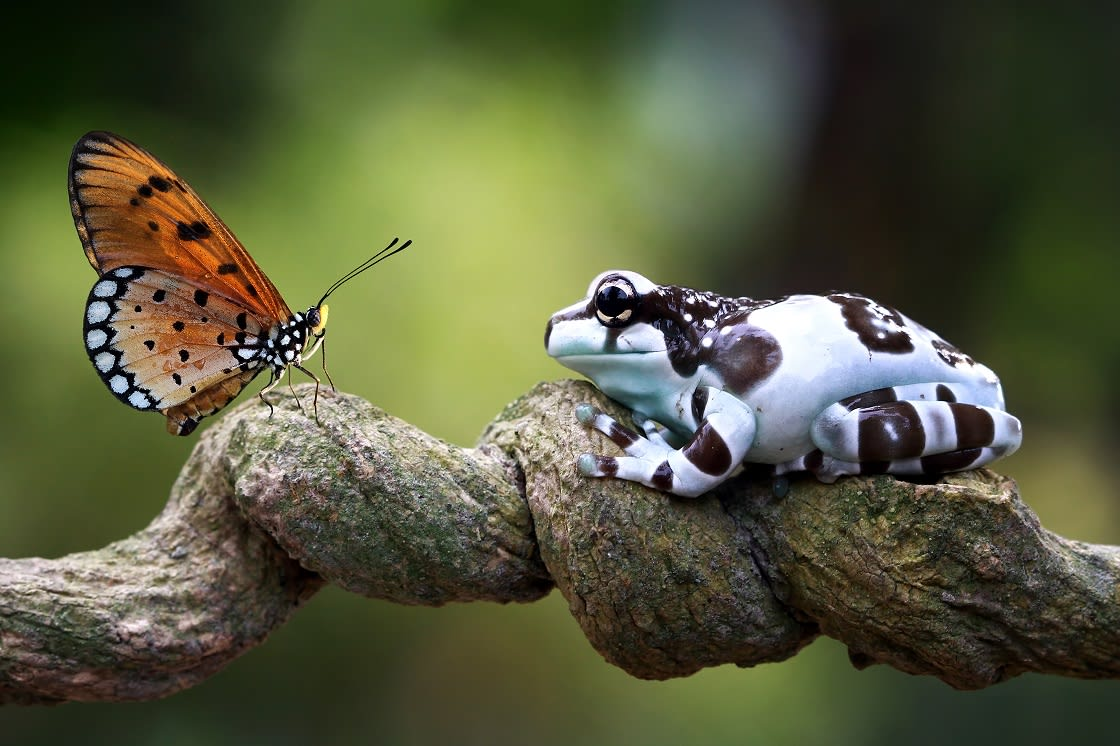 Frog And Butterfly on A Branch