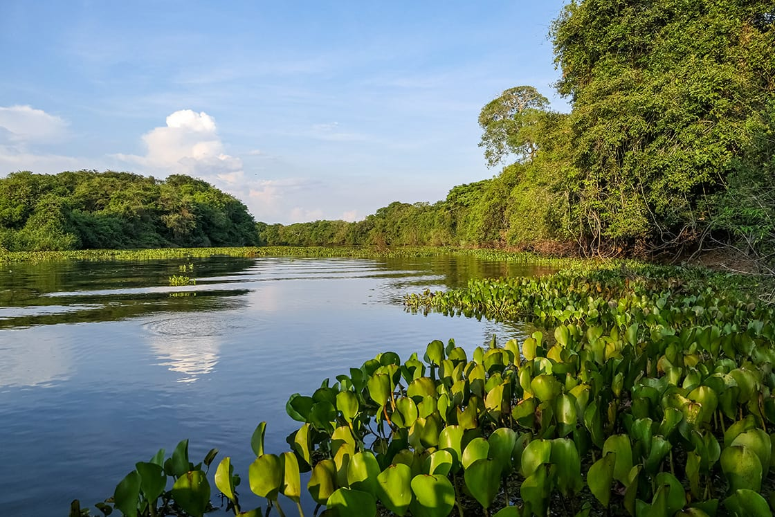 Typical,Pantanal,River,Scenery,In,Afternoon,Light,,Sky,Reflected