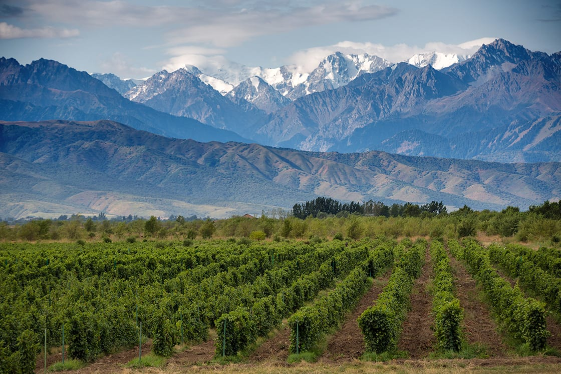 Argentina's wine country