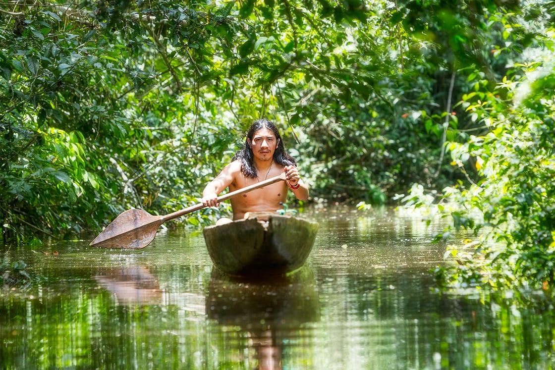 Primary Forest In The Ecuadorian Amazon