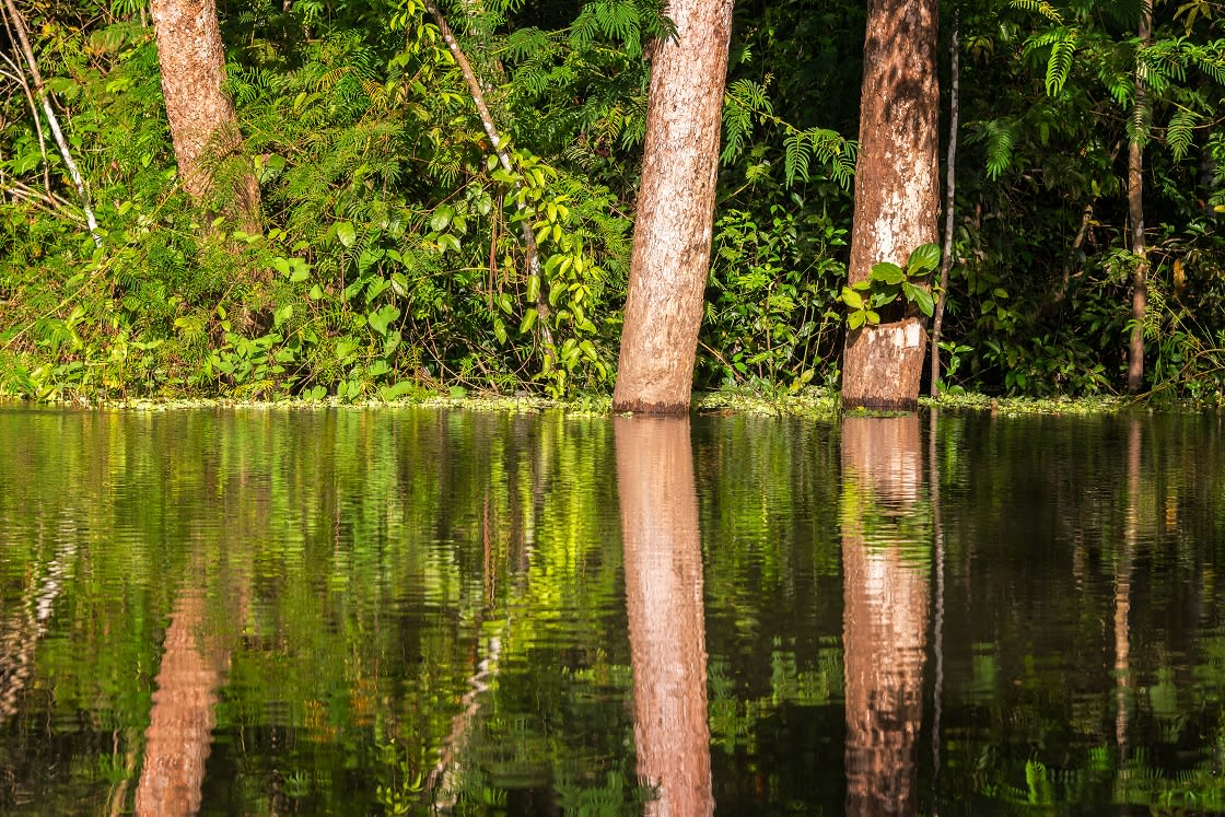 View Of Trees Reflected In The Yanayacu River In
