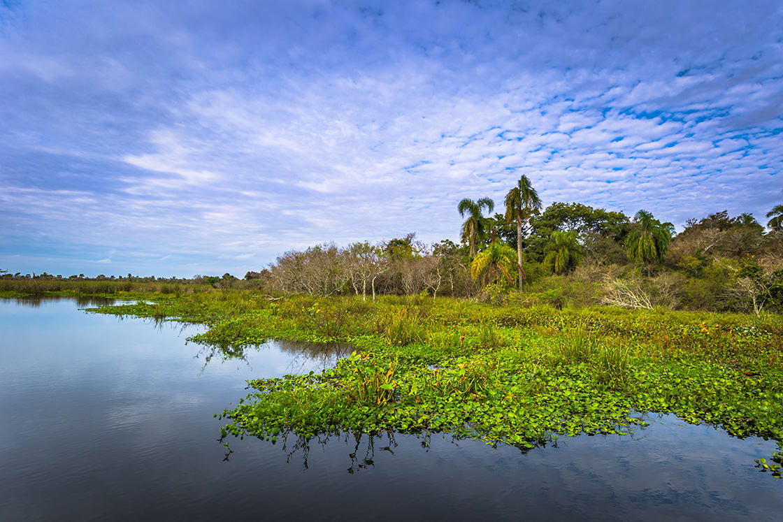 Landscape Of The Provincial Ibera Park