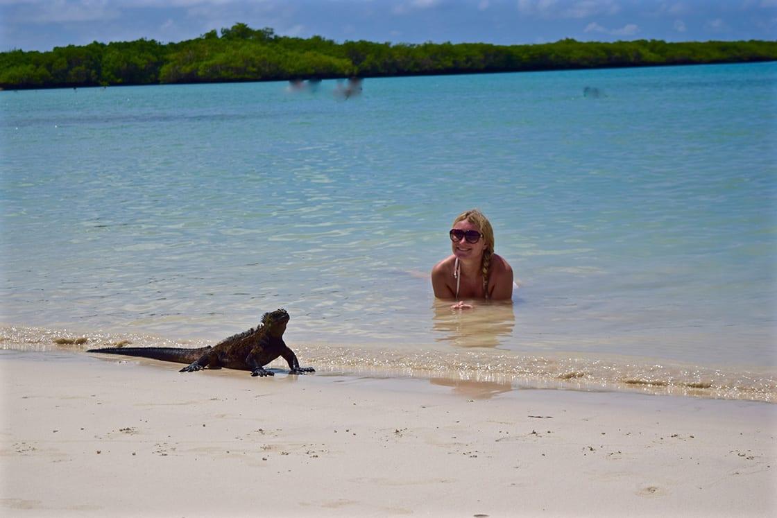 Swimming With Iguanas