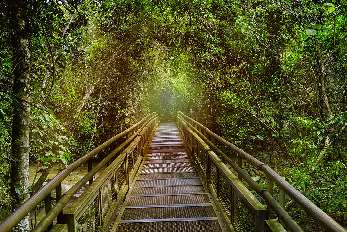 Jungle Rainforest tropic Forest With Fern And Lush Vegetation Nature Trail