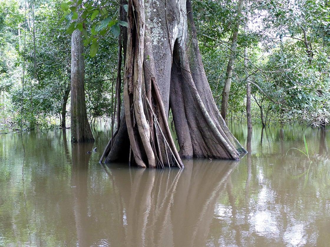 Rainy,Season,In,The,Amazon,,Brazil