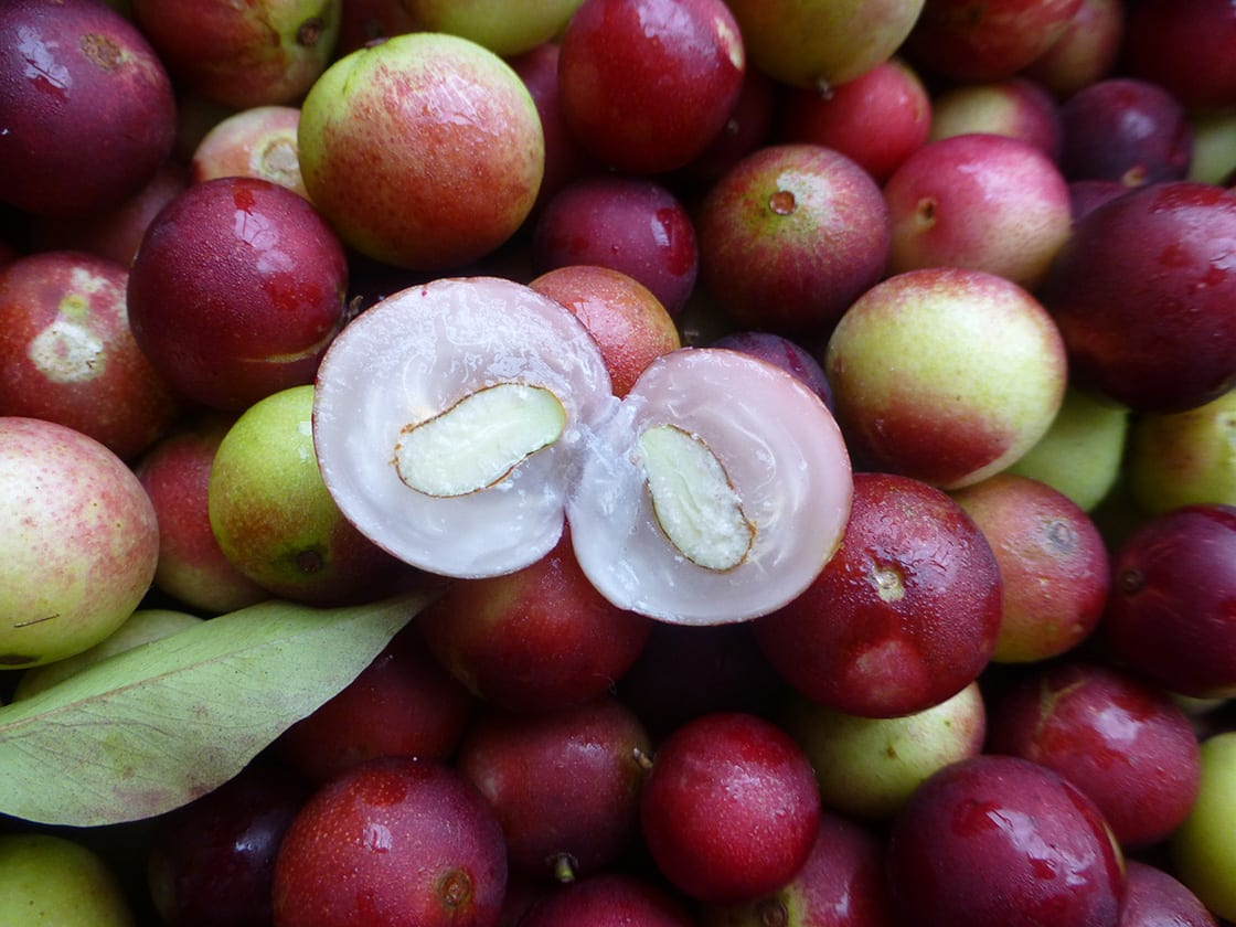 Myrciaria Dubia, Commonly Known As Camu Camu