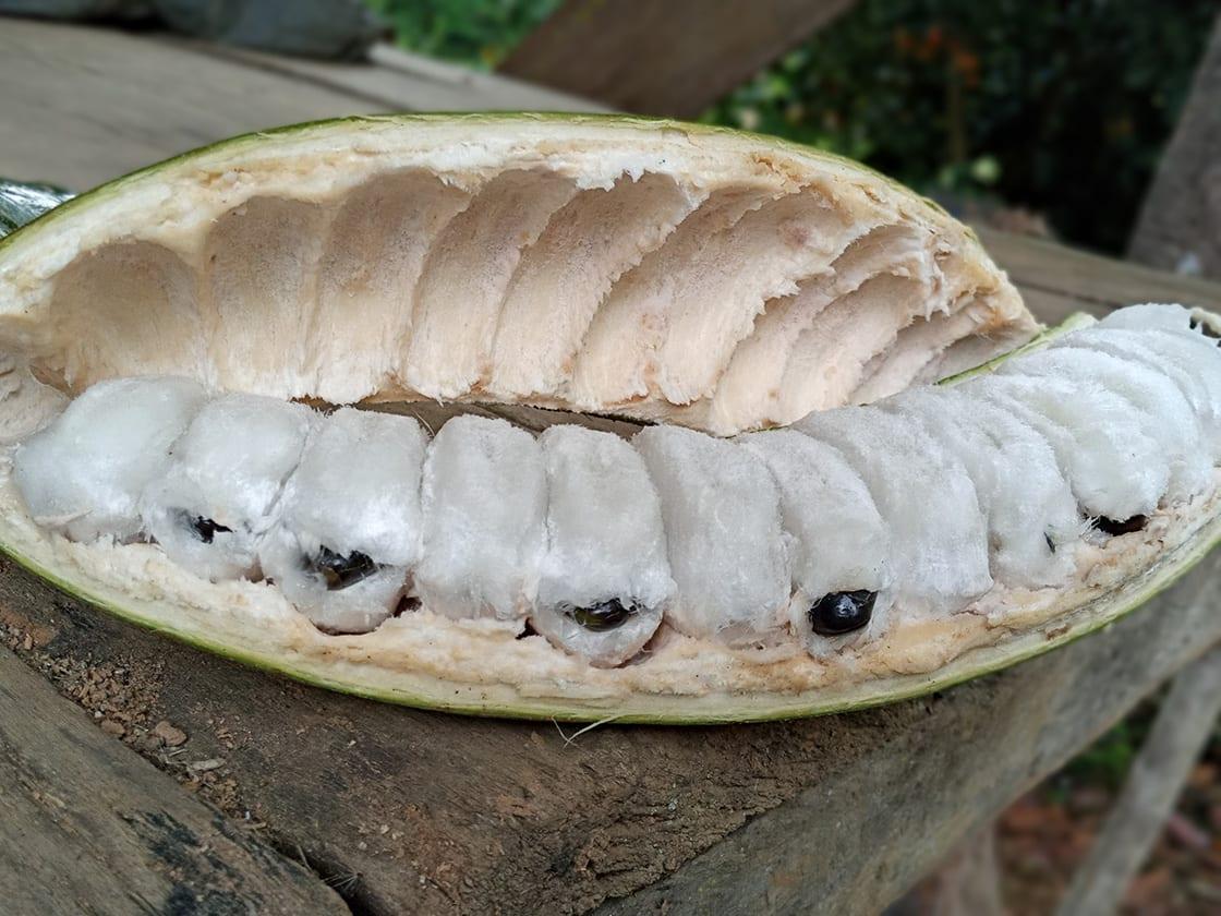Pacae Or Guaba Or Pacay Fruit