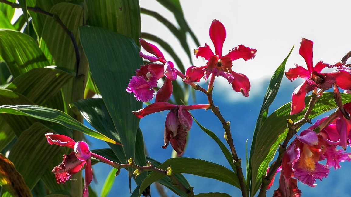 Orchids Growing At Machu Picchu
