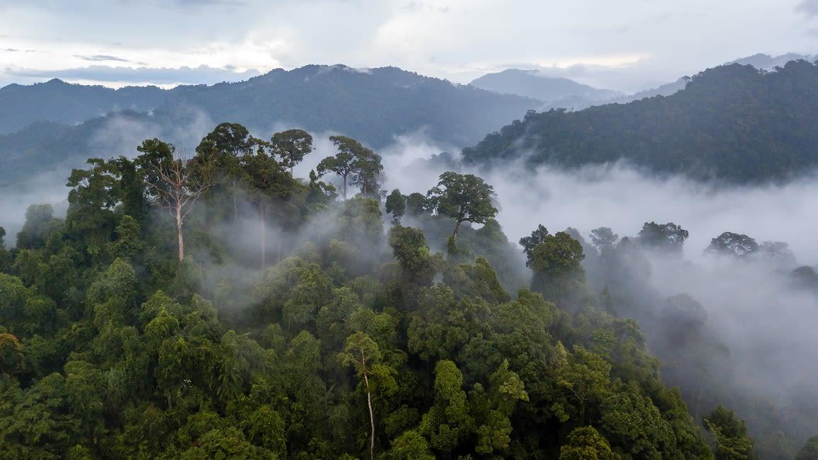 Brazilian-Amazon-Rainy-Season
