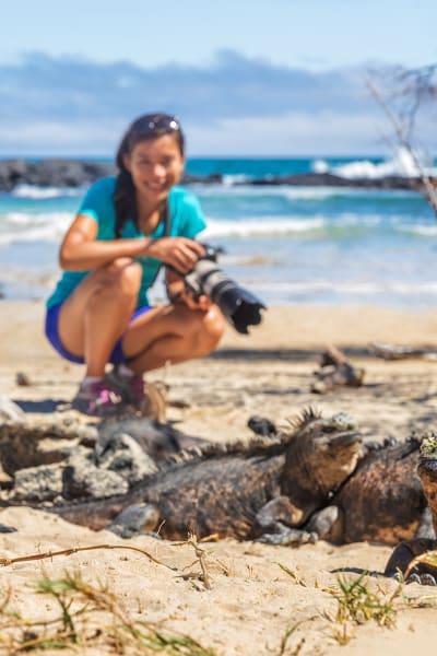 A Lady Taking Photos Of Marine Iguanas