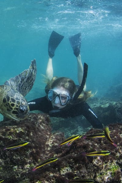 Snorkeling In Galapagos With Turtle