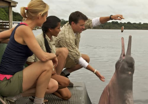 Hand Feeding Pink River Dolphin