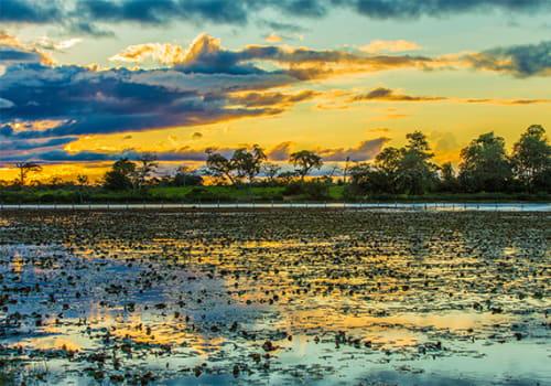 Manaus Sunset over lillies