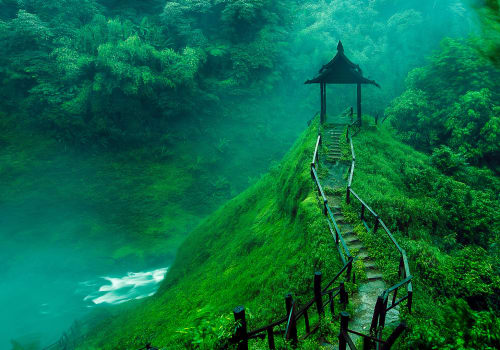 lantern in the middle of the foggy jungle