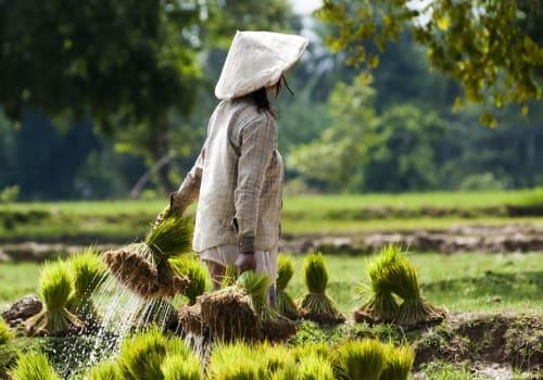 lady walking on a field
