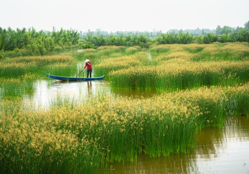 Mekong,Delta,Landscape,With,Vietnamese,Woman,Rowing,Boat,On,Nang