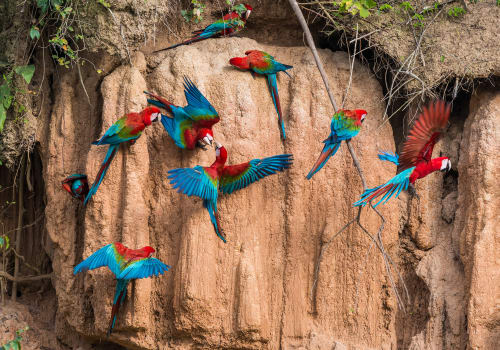 Macaws In A Clay Lick In The Peruvian Amazonian Jungle