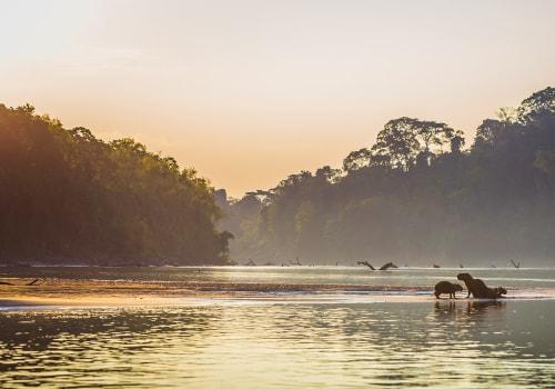 Family Of Capybara At The Amazon Rainforest