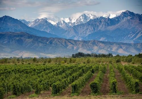 Vineyards at Mendoza, Argentina