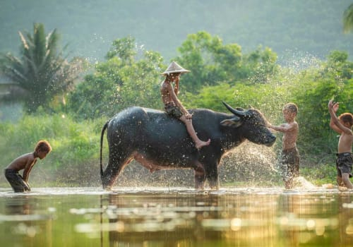 Khmer boys playing in water with water buffalo