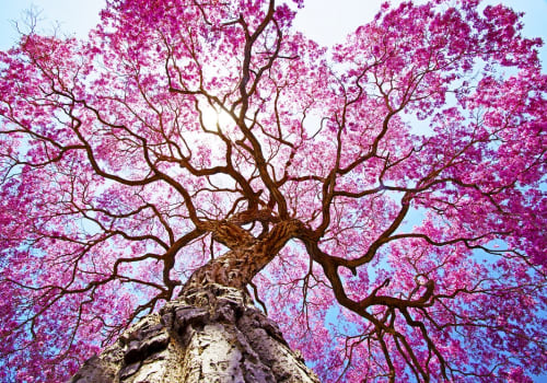 Pink,Lapacho,Tree,At,Sunâ´s,Back,Light.,Transpantaneira,Road,,Pantanal
