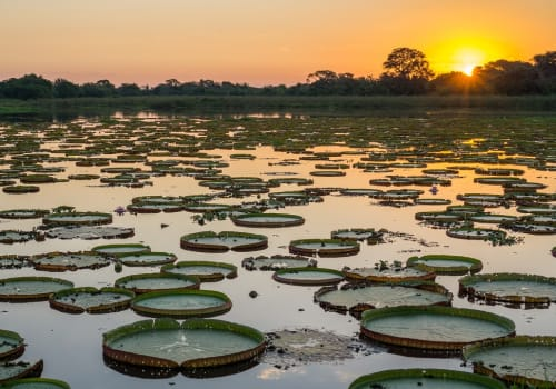 High,Contrast,Sunset,In,Brazilian,Pantanal,With,Victoria,Regias
