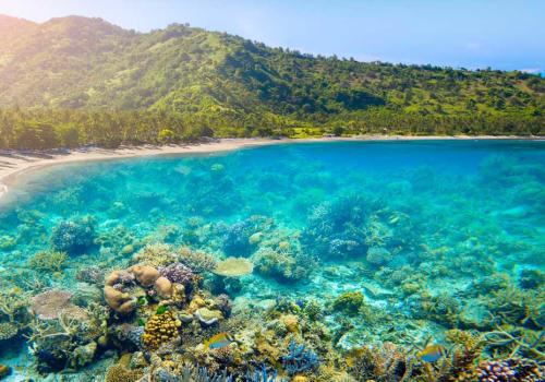 Marine life seen through a clear water