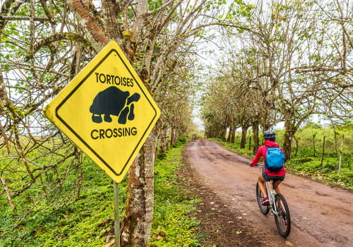 Galapagos,Giant,Tortoise,Funny,Sign,And,Woman,Tourist,Cycling