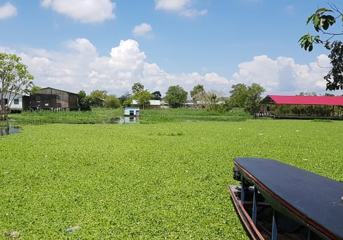 Yarinacocha,Lake,Located,In,Peru's,Amazon,Rainforest.,Green,Duckweed,Waterplants