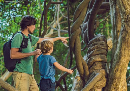 Father,And,Son,Watching,Tropical,Lianas,In,Wet,Tropical,Forests.