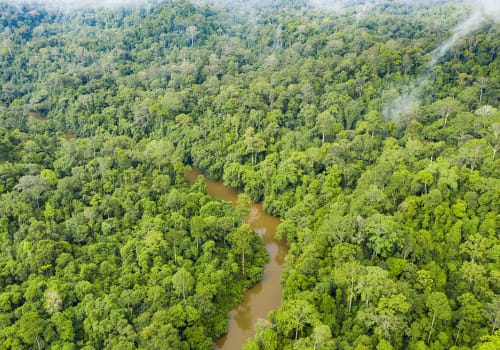 View,From,Above,,Stunning,Aerial,View,Of,A,Tropical,Rainforest