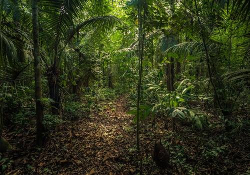 The,Amazon,Rainforest,In,Manu,National,Park,,Peru