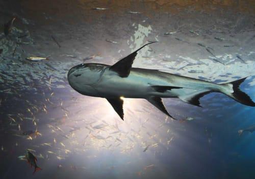 Mekong Catfish