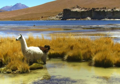 The Salar is virtually devoid of any wildlife or vegetation