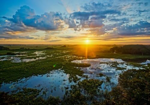 Sunrise Pantanal Brazil Pantanal